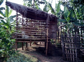 Raised goat house for a pure dairy doe donated by Heifer Project Uganda