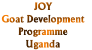 JOY Goat Development Programme, Uganda