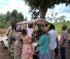 Bringing a dairy male to a village in Masaka District