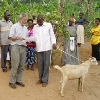 Milk goat being brought to a partner project