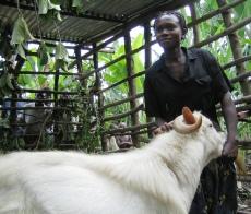 Community buck keeper in Bundibugyo District