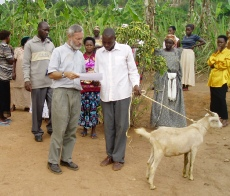 Giving a goat to a farmers group in Masaka District